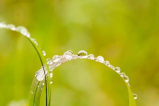 Raindrops   by ZoneFlow