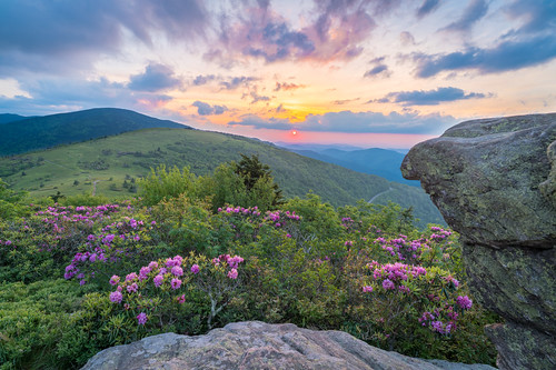 at rhododendrons backpacking june rhododendronbloom roanmountain roanhighlands janebald sunset catawbarhododendron blueridgemountains hdr appalachiantrail