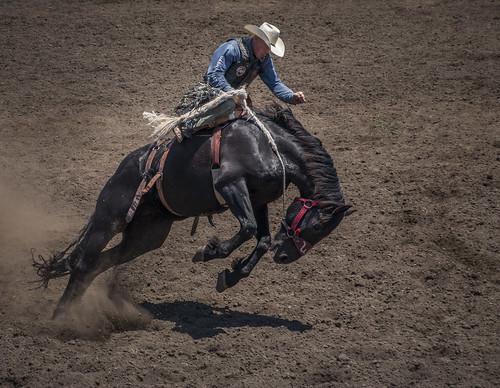 2017 calfiornia duncanmills horses riders rodeo bucking russian river horse sonomacounty
