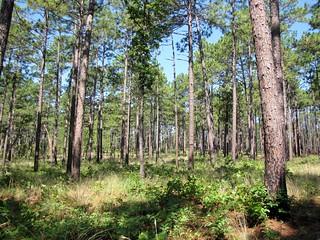 Weymouth Woods-Sandhills Nature Preserve (2)