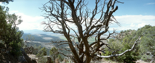 tree dead blackcanyonofgunnison landscape colorado film 35mm horizon panorama