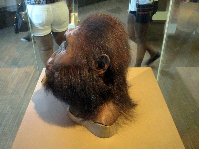 Male Reconstruction of Paranthropus boisei Based on OH 5 & KNM-ER 406 by John Gurche