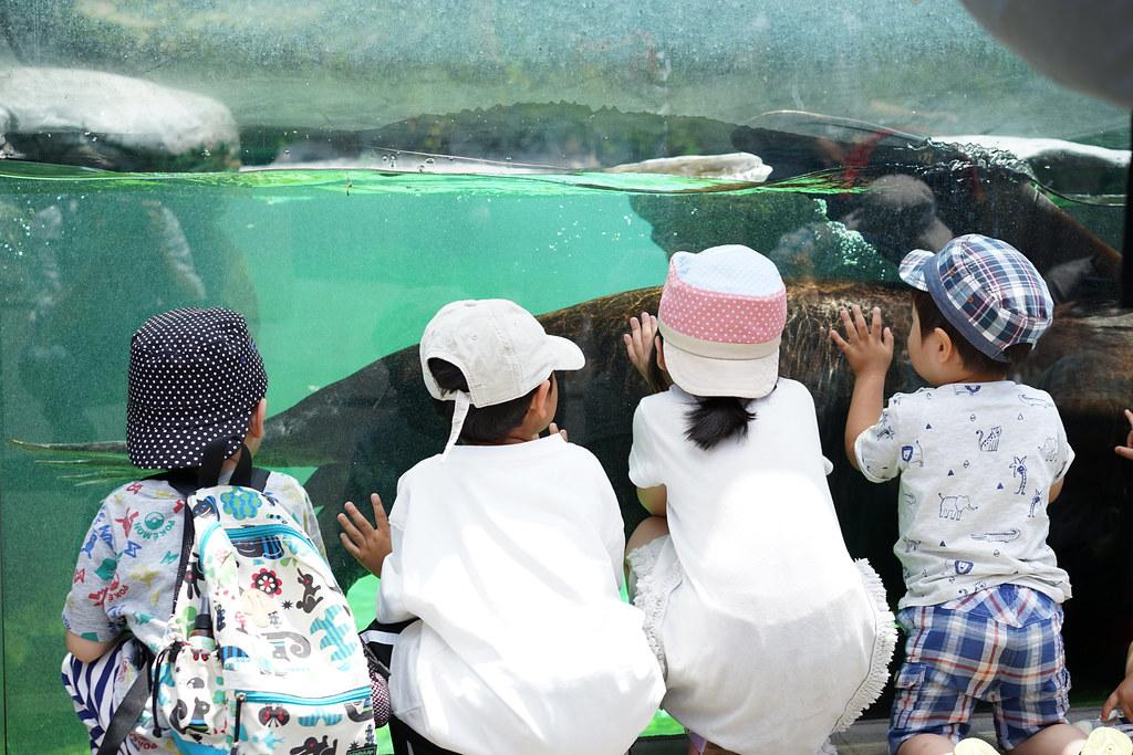 上野動物園_アザラシ