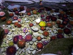 Erizos y piedras de colores.