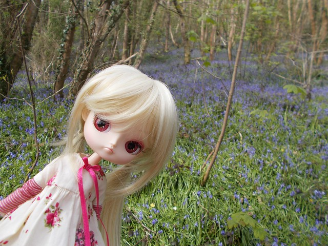 Petunia in the Bluebell Woods
