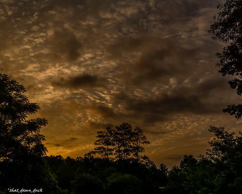 sunset sundown clouds trees nature