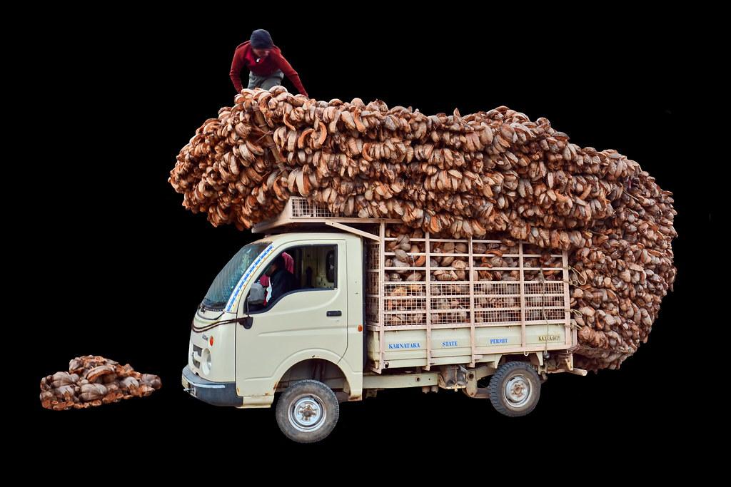 India - Karnataka - Hampi - Truck Loading Artist With Coco