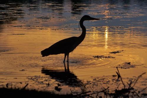 paulinuk99999 heron sunset explore