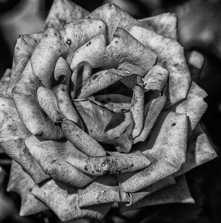 Flowers end   by keith ellwood
