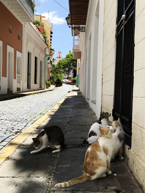 Waiting for Food, Old San Juan