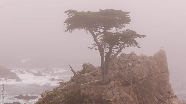 Lone Cypress, Monterrey, California - USA - 0274