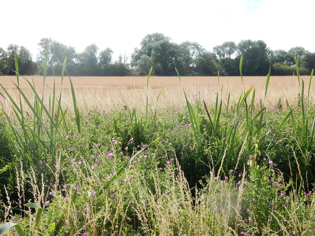 Flowery ditch Ely Circular