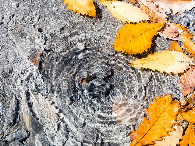 Autumn leaves in hot spring (Nikko Yumoto)