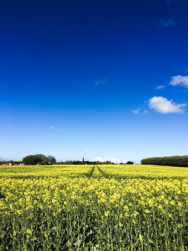 spring bluesky blue yellow sweden malmö sunrise flowers fields