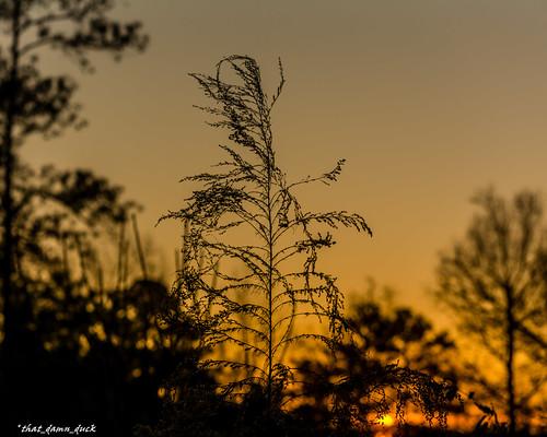 sunset nature plant