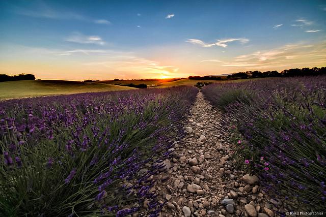 France-Alpes de Haute Provence-Sunset Valensole et sa lavande-5