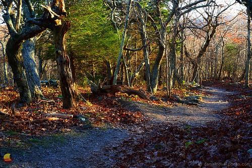 luray virginia unitedstates trees trail path hike hiking outdoors etbtsy fall autumn colors foliage stonyman shenandoah nationalpark park va landscape photography nature woods