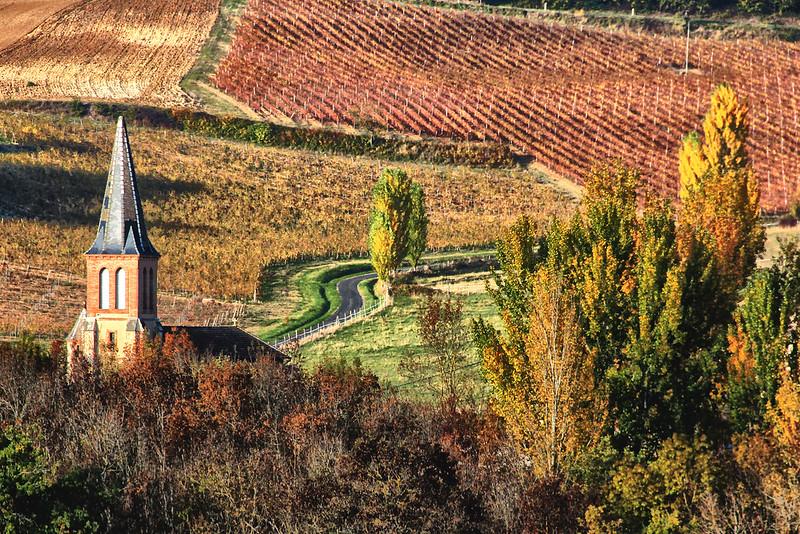 vignes de Gaillac