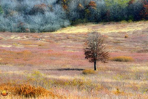 stanley virginia unitedstates shenandoah nationalpark park va etbtsy bigmeadow meadow colors pattern lonely tree outdoors landscape photography travel hiking