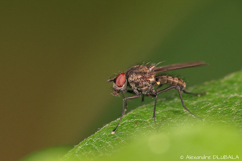 The fly (3)