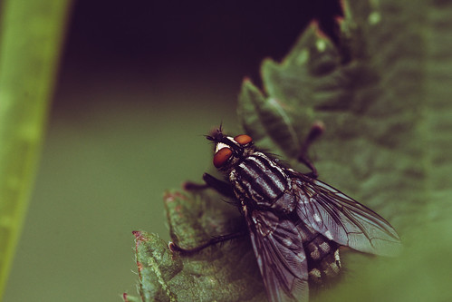Insect | by ZoneFlow