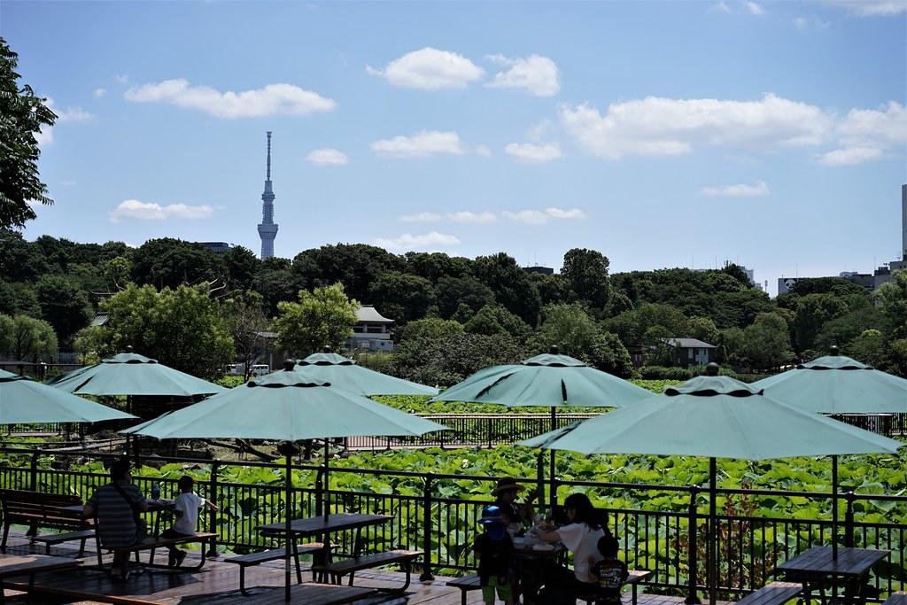上野動物園_スカイツリー
