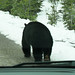 Bear Jasper Nationalpark Canada