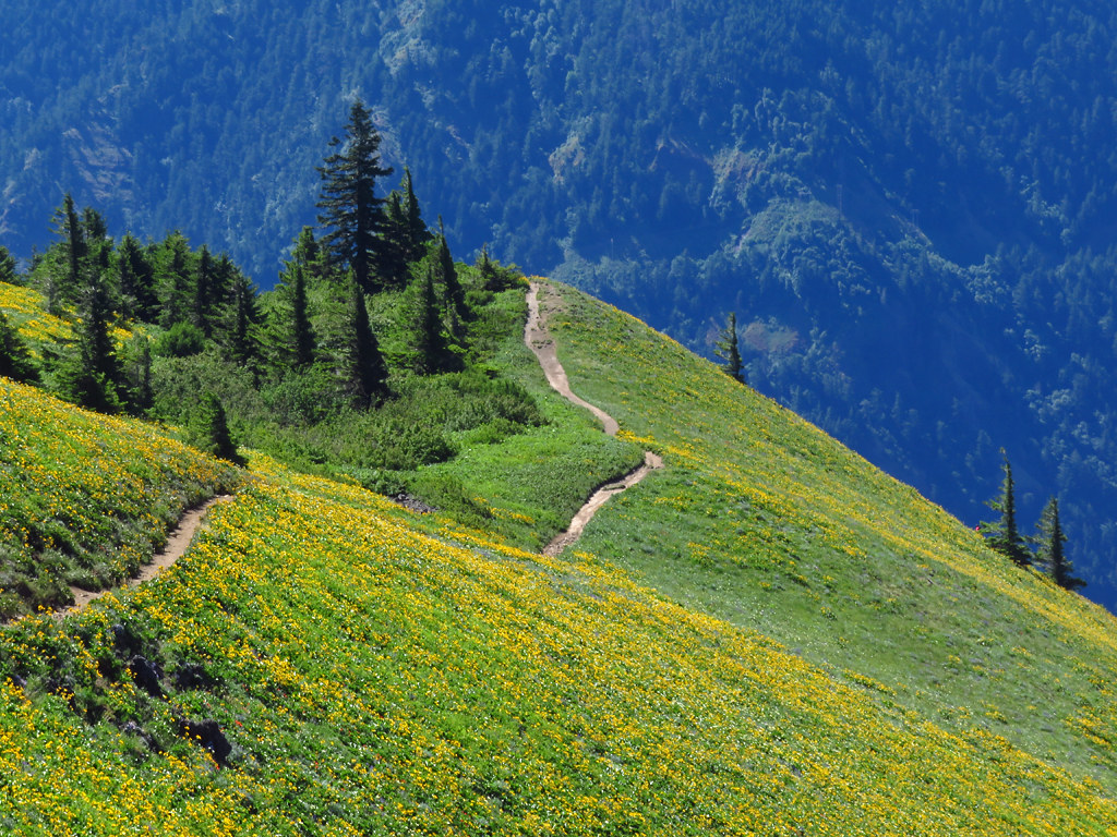 Dog Mountain Trail in Washington