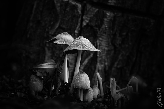 Mushrooms on the forest floor