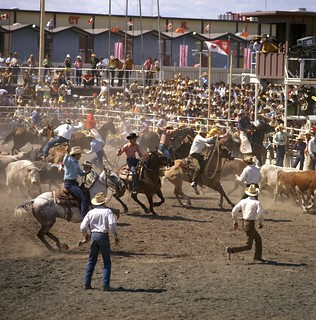 Round-up at the Calgary Stampede