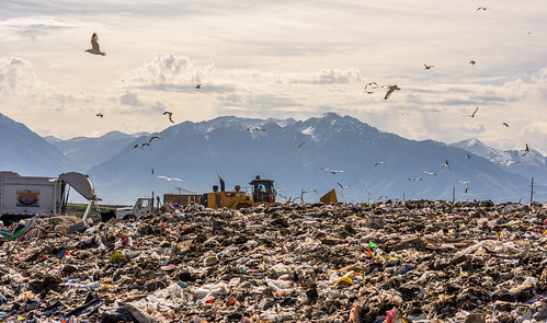 Seagulls Descend Upon the Trans-Jordan Landfill | by Geoff Livingston