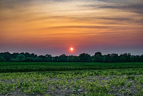 sunset summer newyork color field evening us corn warm unitedstates dusk farm pittsford