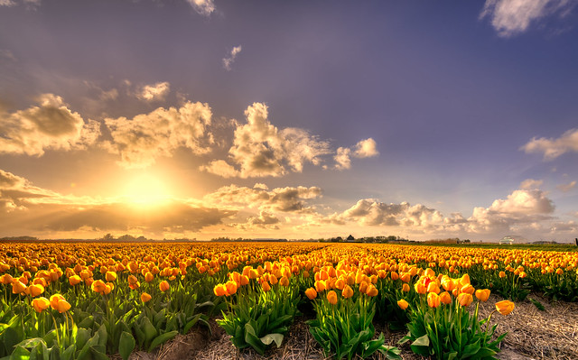 In Holland we're so rich we grow flowers of pure gold.