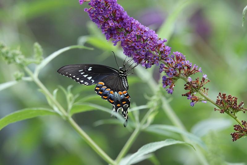 More from the Norfolk Botanical Garden
