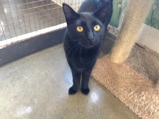 Max - 2 year old neutered male | by carescatshelter