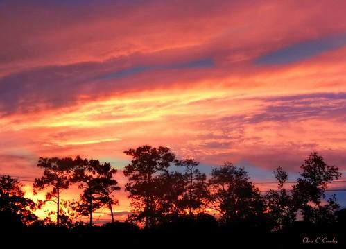 toogoodtopassup floridasunset sunsetinormondbeachflorida sunset trees silhouettes sky clouds dramaticsunset