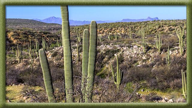 Saguaro Cactus (Explored 4 July 2017)