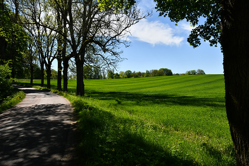 outdoor travel nature natur sweden sverige västergötland höjentorp trees tree fields field agriculture sky greem road nikond500 nikon d500 nikkor35mm
