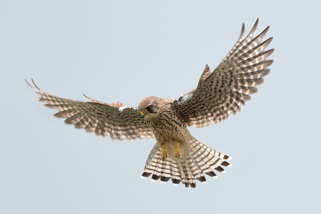 Spread your wings....