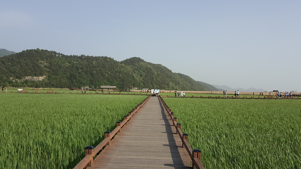 Suncheon Bay Wetland (22)