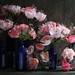 florabeane by Amity Beane
