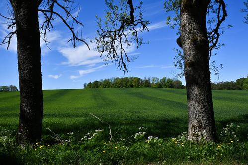 outdoor travel nature natur sweden sverige västergötland höjentorp trees tree fields field agriculture sky greem nikond500 nikon d500 nikkor35mm