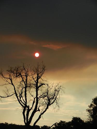 western australia bannister landscape sunset eucalyptus sun tree bush sky cloud dana iwachow nikon s9200