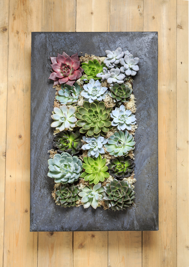 Grand Living Wall Succulent Planter Free Creative Commons Flickr