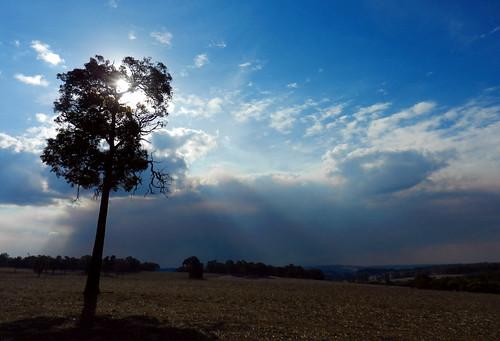 western australia bannister landscape tree eucalyptus field farm bush sky cloud dana iwachow nikon s9200