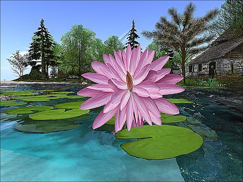 Serenity's Haven -Water Lotus | by mromani50