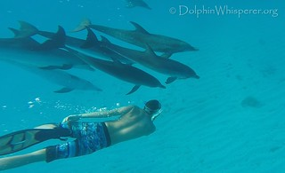 Dolphin Whisperers Soul Connections Bimini (1) | by Celebrating Everyday Ecstacy