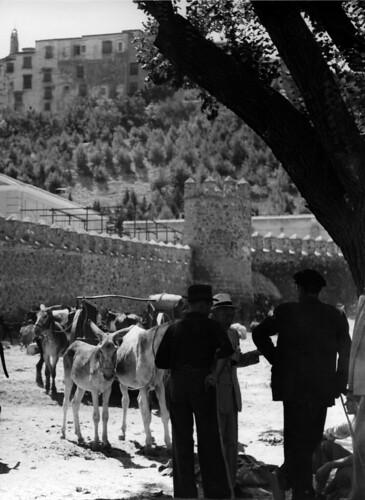 Mercado de ganado en el Paseo de Recaredo. Toledo en los años 50. Fotografía de Nicolás Muller  © Archivo Regional de la Comunidad de Madrid, fondo fotográfico