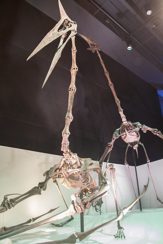 Museum of Natural Science_80