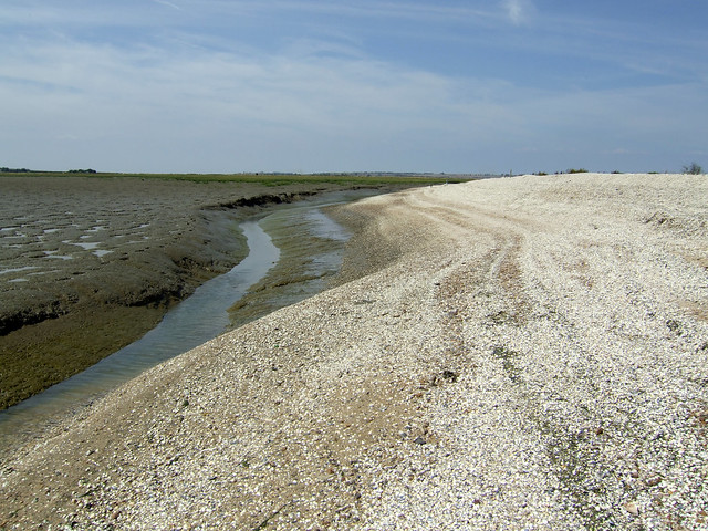 The end of Shell Ness, Isle of Sheppey